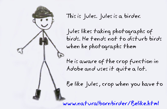 Be like a birder, crop