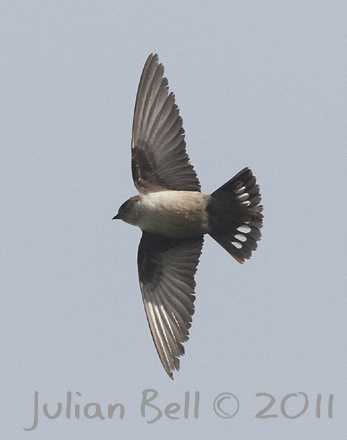 Crag Martin - new for Norway