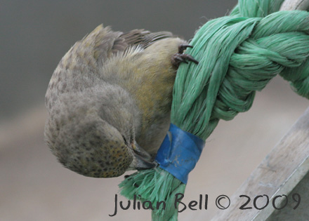 Feeding in the rigging