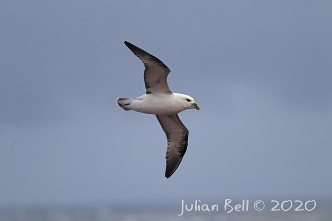 Fulmar, Aasta Hansteen, April 2020