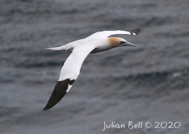 Gannet at Åsgard, Norwegian Sector, March 2020