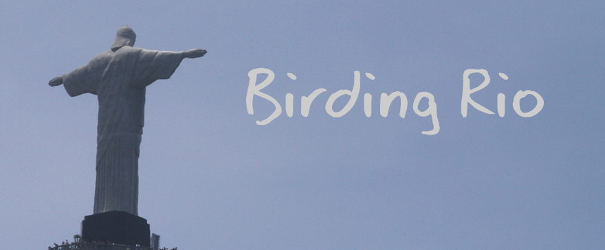 Birding Rio - or not!