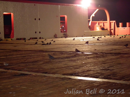 Grounded thrushes rest on deck